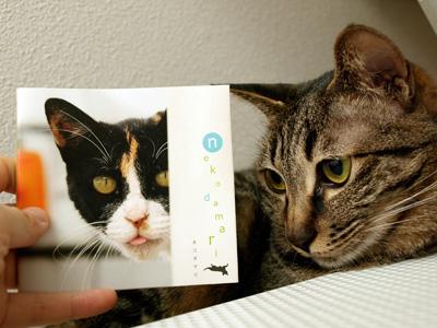 Nekodama_book_1
